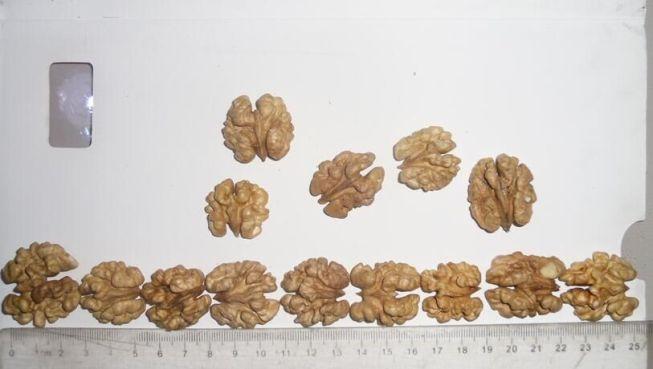 walnut kernel ch